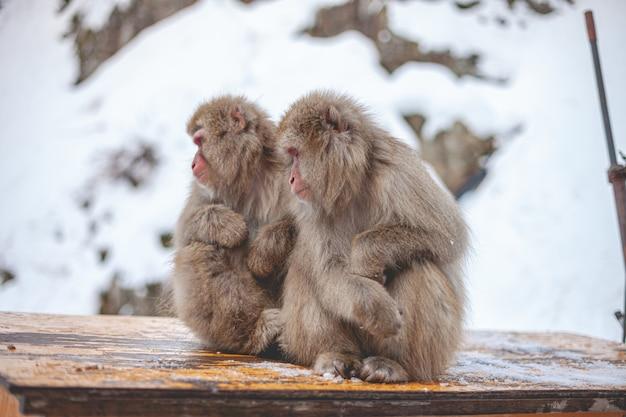 Selectieve focus shot van twee makaak apen zitten in de buurt van elkaar Gratis Foto
