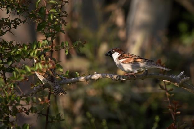 Selectieve focus shot van twee vogels op de tak van een boom in het bos Gratis Foto