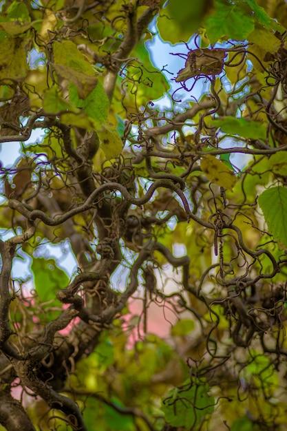 Selectieve focus shot van wijnstokken planten kruipen op een boom Gratis Foto