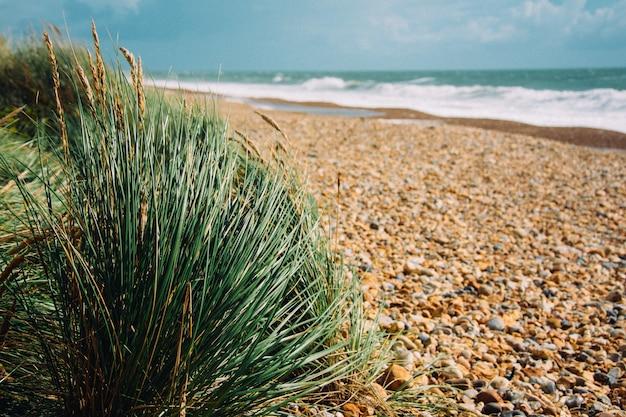 Selectieve focus van rotsachtig strand met gras en golvende oceaan die schijnt onder de zonnestralen Gratis Foto