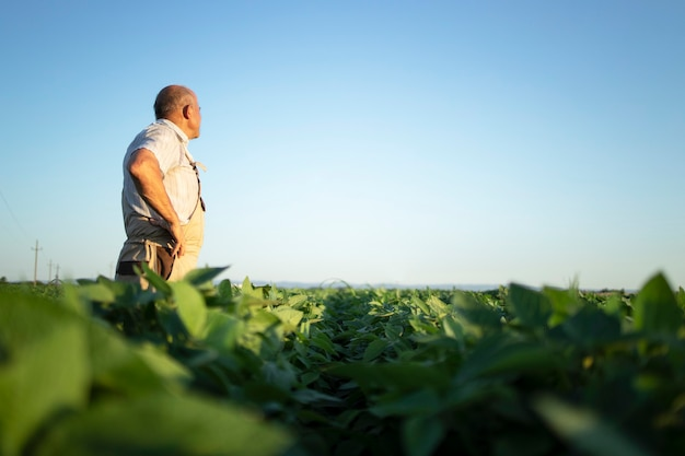 Senior boer agronoom in sojabonen veld met uitzicht op en controle van gewassen voor de oogst Gratis Foto