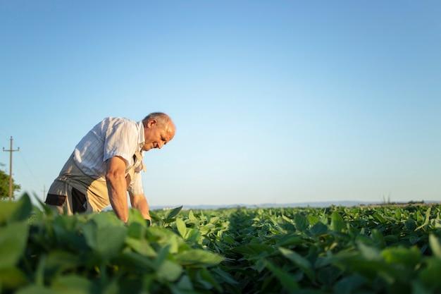 Senior hardwerkende boer agronoom in soja veld gewassen vóór oogst controleren Gratis Foto
