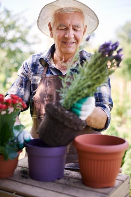 Senior man aan het werk in het veld met bloemen Gratis Foto