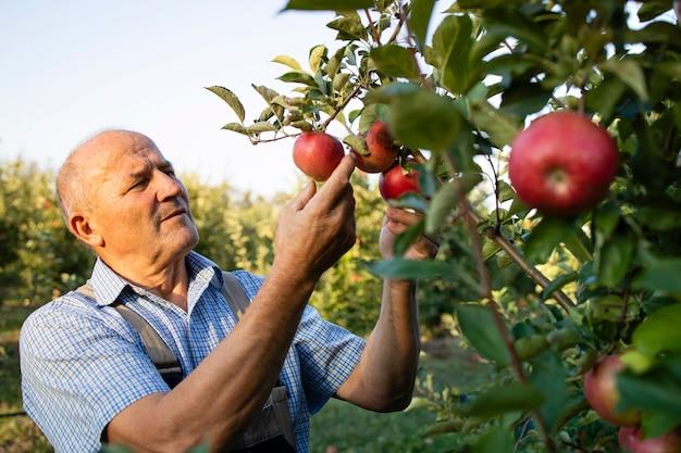 Senior man werknemer controleren appels in fruitboomgaard Gratis Foto