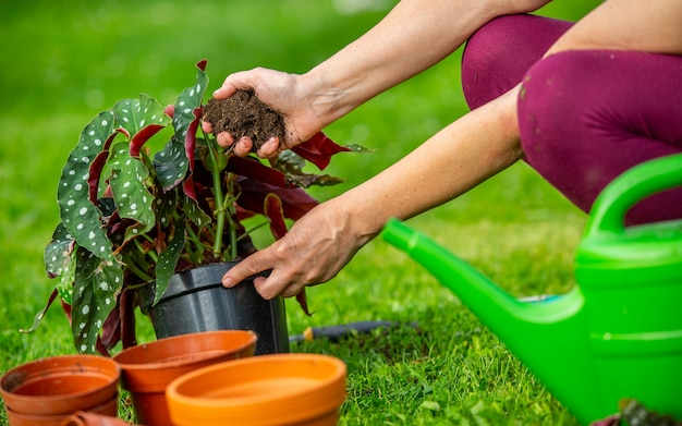 Senior vrouw haar nieuwe planten of bloem planten in de grote tuin, tuinieren concept Premium Foto