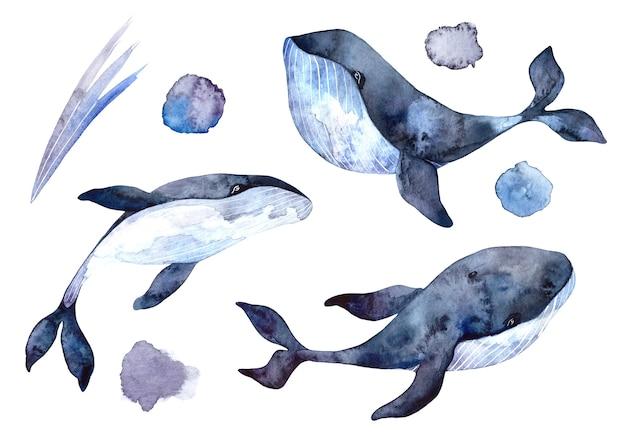 Set aquarel walvissen, handgeschilderde illustraties geïsoleerd op een witte achtergrond, realistische onderwaterdieren Premium Foto