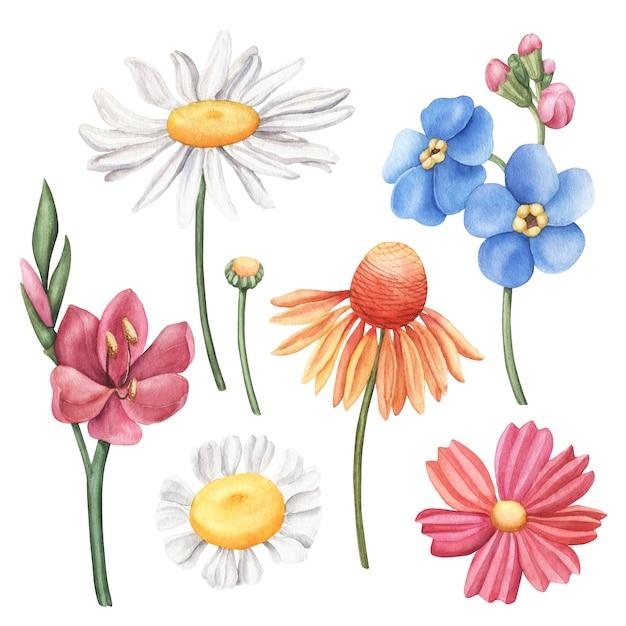 Set van kleurrijke handgetekende aquarel wilde bloemen Premium Foto