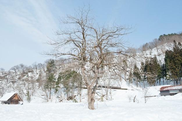 Shirakawago, historisch winterdorp in japan. Premium Foto