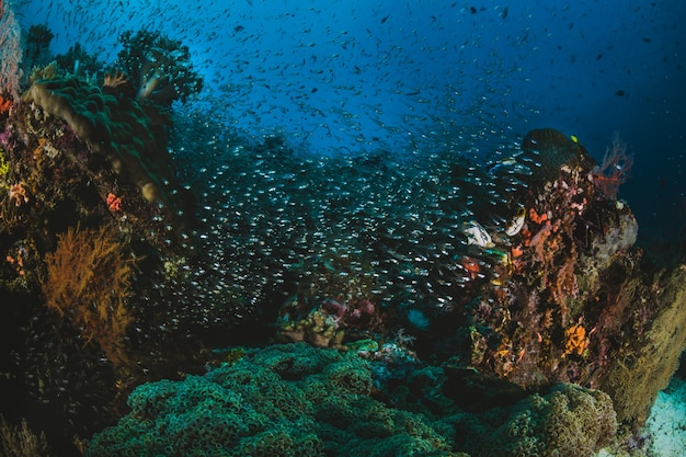 Shoal van tropische vis in hun ecosysteem Gratis Foto