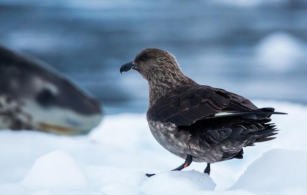 Shot van een jager die zich op een besneeuwde grond in antarctica bevindt Gratis Foto