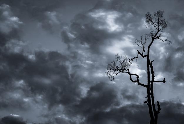 Silhouet dode boom op donkere dramatische hemel en witte wolkenachtergrond voor dood en vrede. Premium Foto