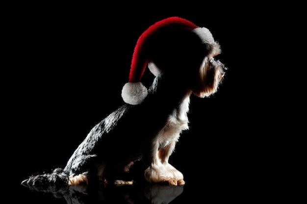 Silhouet op zwart van een yorkiehond die kerstmishoed draagt Premium Foto