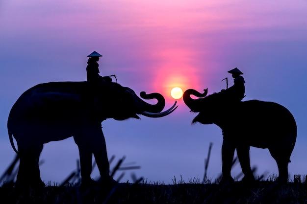 Silhouet van een olifant en een mahout bij zonsopgang tijdens het reizen naar rijstvelden. Premium Foto