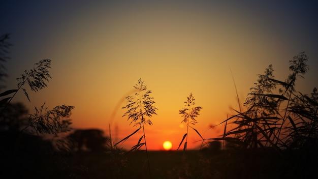Silhouet van gras tijdens zonsondergang Gratis Foto
