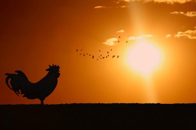 Silhouet van haan kraaiende tribune op gebied in de ochtend met zonsopgang Premium Foto
