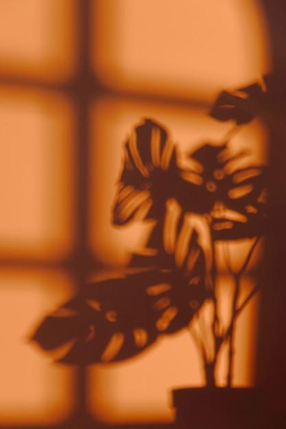 Silhouet van kamerplant op de muur Gratis Foto