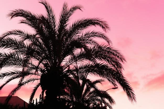 Silhouet van palmen in zonsondergangtijd in purpere kleuren. Premium Foto