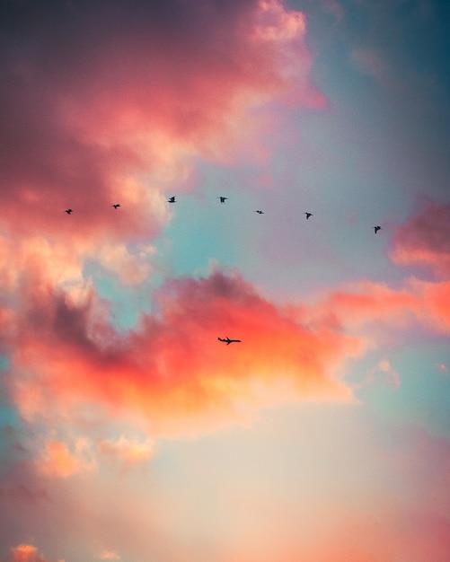 Silhouet van vogels vliegen Gratis Foto