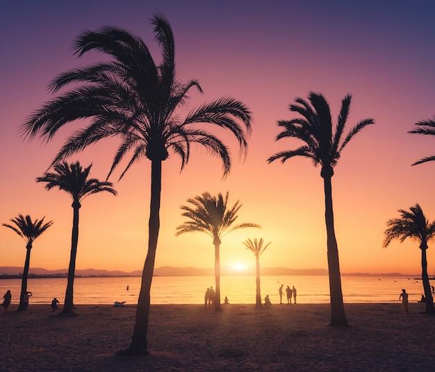 Silhouetten van palmbomen tegen kleurrijke hemel bij zonsondergang Premium Foto