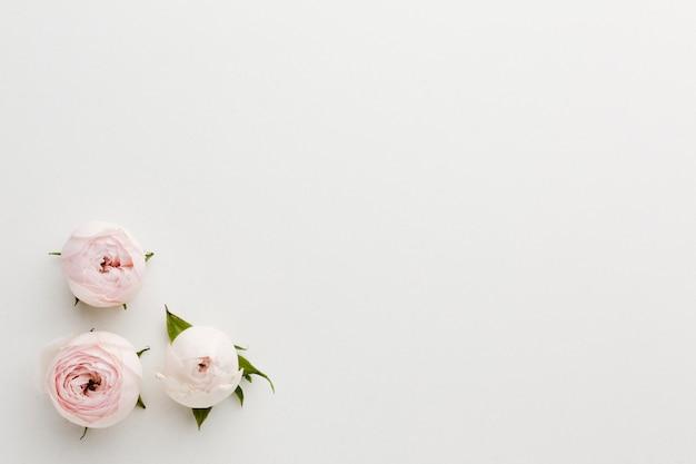 Simplistische roze en witte rozen en kopie ruimte achtergrond Gratis Foto
