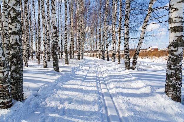 Skirondes in een winterberkbos langlaufloipes Premium Foto