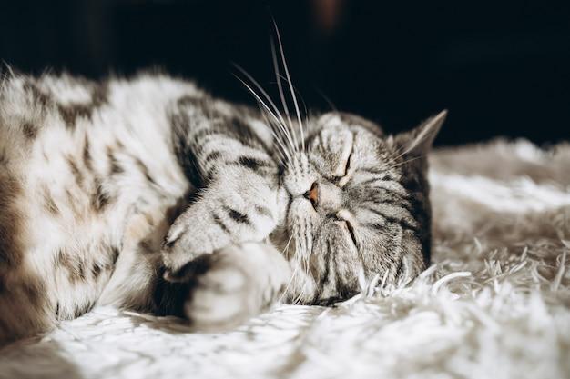 Slaperige huiskat op de bank Gratis Foto