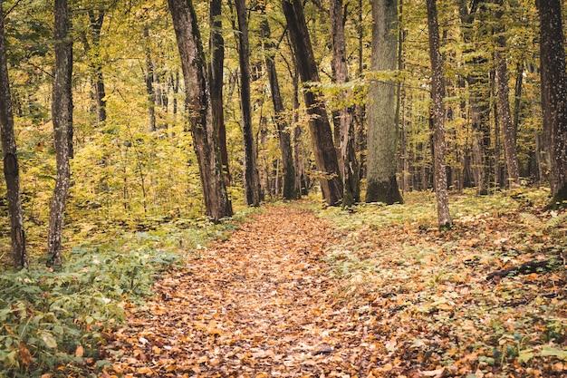 Sleep in het bos op herfstseizoen Premium Foto