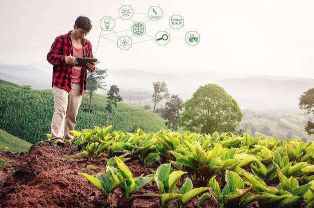 Slimme boer met behulp van technologie-app in tablet voor het controleren van groei-analyse door technologie in landbouw veld boerderij smart farm concept Premium Foto