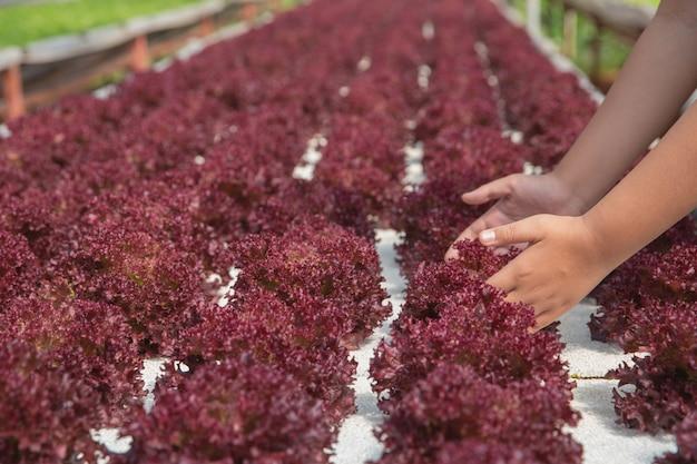 Sluit handboer in hydroponic tuin tijdens het voedselachtergrond van de ochtendtijd Gratis Foto
