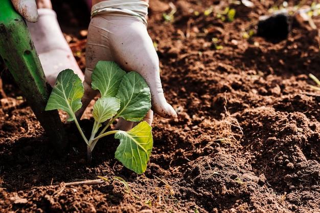 Sluit handen omhoog plantend in de grond Premium Foto