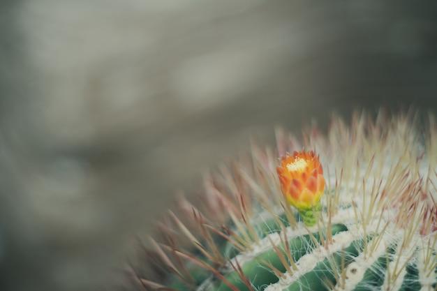 Sluit omhoog achtergrond van de cactus de uitstekende retro stijl Premium Foto