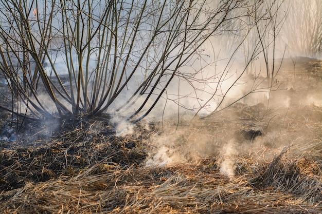 Sluit omhoog beeld van gebrand gras en struiken op gebied na bosbrand Premium Foto