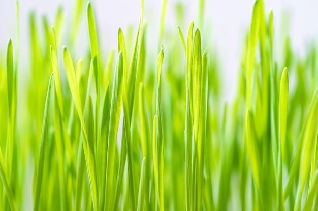 Sluit omhoog bladen van groen gras Premium Foto