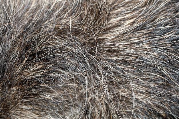 Sluit omhoog grijze hondhuid voor achtergrond Premium Foto