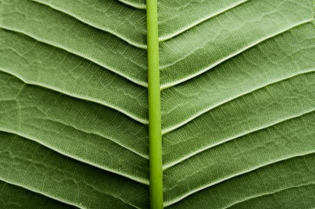 Sluit omhoog groene bladlijn Gratis Foto