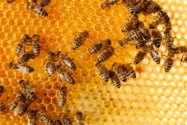 Sluit omhoog honingraat in houten bijenkorf met bijen op het Premium Foto