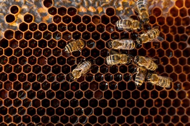 Sluit omhoog honingraat in houten frame met bijen op het Premium Foto