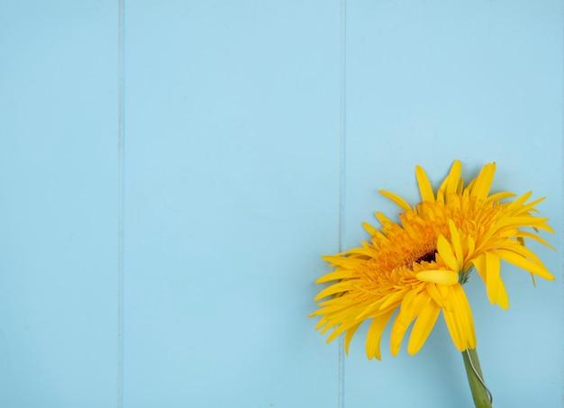 Sluit omhoog mening van bloem op rechterkant en blauwe oppervlakte Gratis Foto