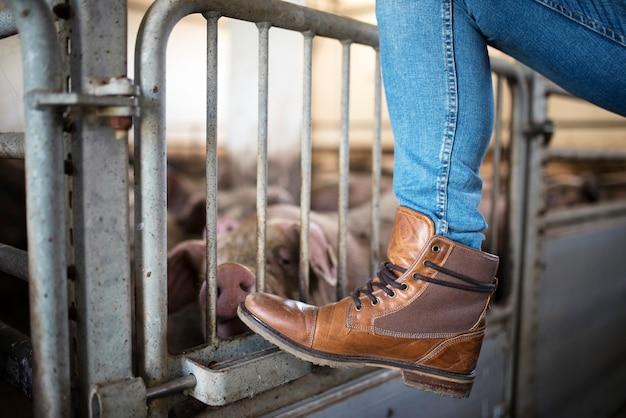 Sluit omhoog mening van het been en de laarzen die van de boer op de kooi leunen terwijl varkens op achtergrond eten Gratis Foto