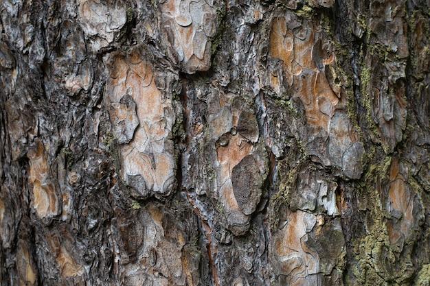 Sluit omhoog op de mooie textuur van de boomschors Premium Foto