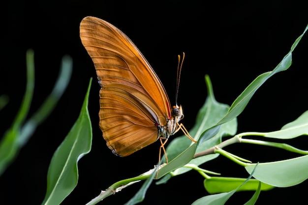 Sluit omhoog oranje vlinder met zwarte achtergrond Gratis Foto