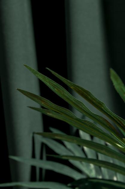 Sluit omhoog palmbladeren Gratis Foto