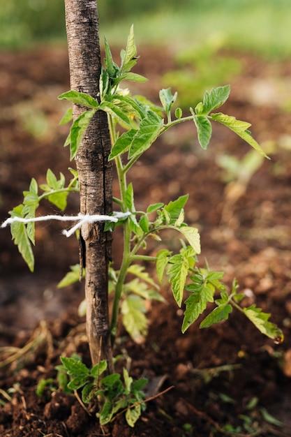 Sluit omhoog plant in de tuin wordt uitgezet die Gratis Foto
