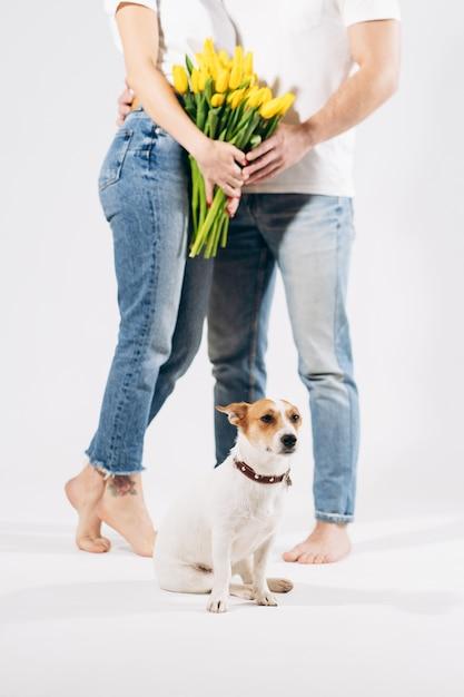 Sluit omhoog portret van hond met gele bloemen dat op witte achtergrond met mooi erachter paar wordt geïsoleerd. valentijnsdag vieren, vrouwendag. liefde en gelukkig familieconcept. Premium Foto