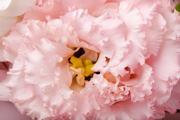 Sluit omhoog van chrysantenbloem Premium Foto