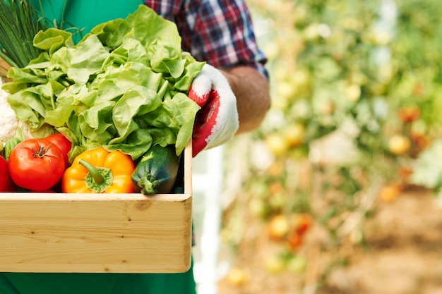 Sluit omhoog van doos met rijpe groenten Gratis Foto