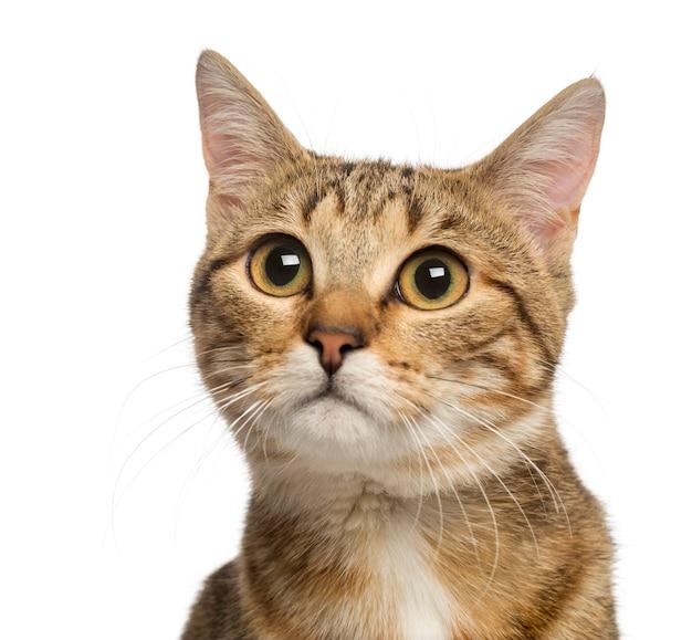 Sluit omhoog van een kat van het gemengd ras die op wit wordt geïsoleerd Premium Foto