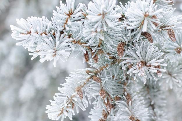 Sluit omhoog van sparrentak in de sneeuw Premium Foto