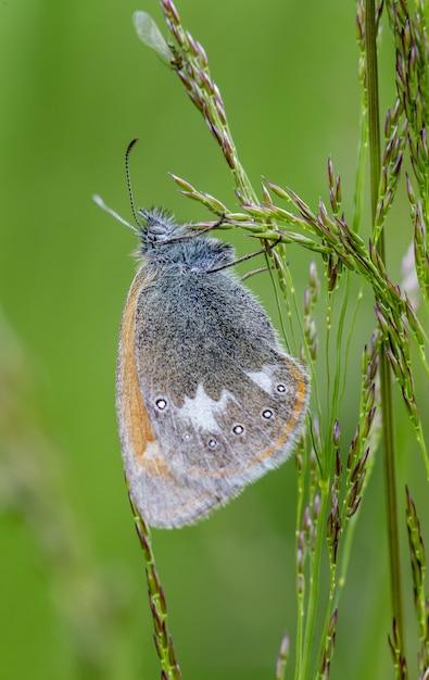 Sluit omhoog van vlinder op installatie Gratis Foto