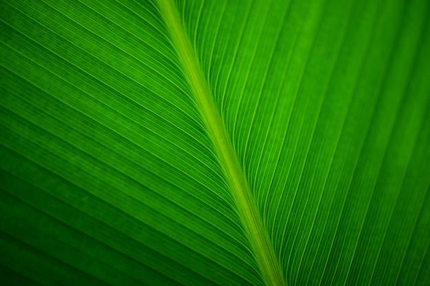 Sluit omhoog verlof van een bananenplant Gratis Foto